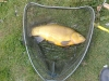 7lb-tench-sharnbrook